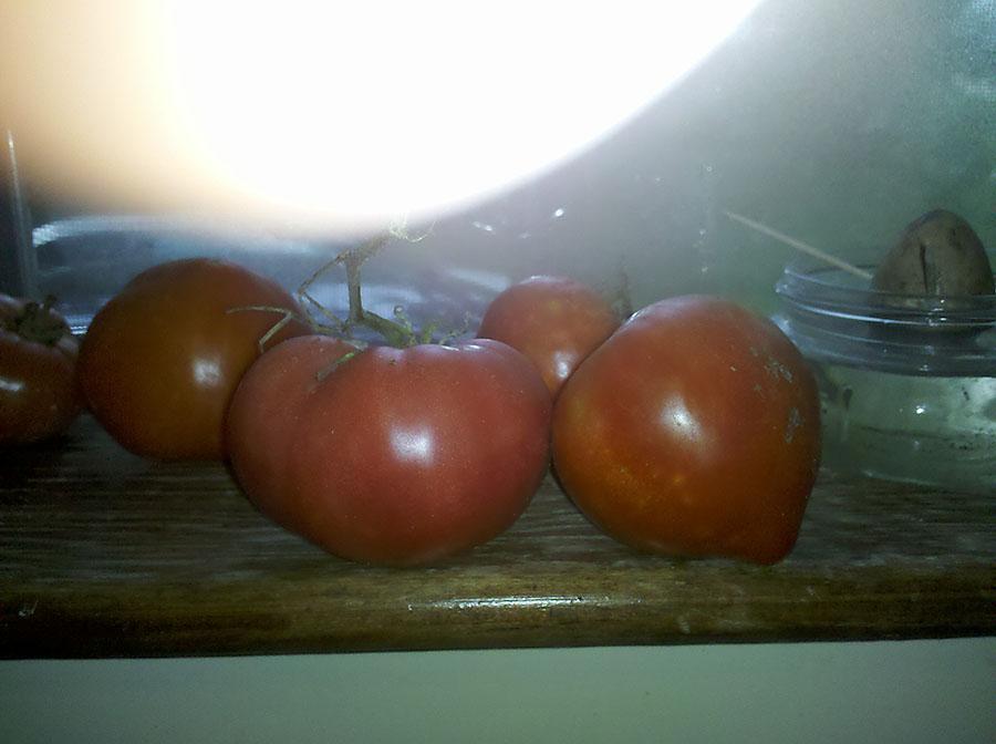 Tomato2013
