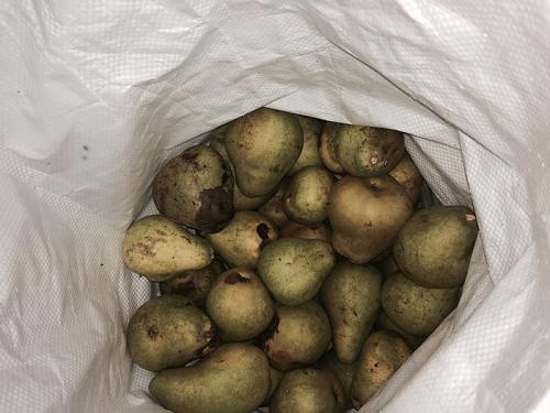 Pear20151