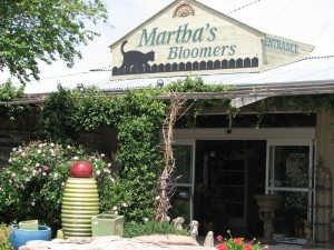 Martha's bloomers_0